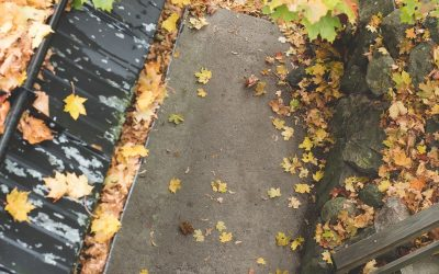 Leaf Damage and Your Roof