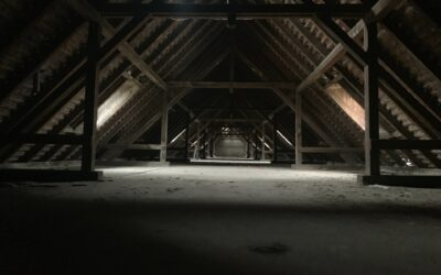 Hearing Animals in the Attic: Here's What You Can Do